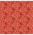Poppy seamless floral pattern vector image