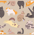 seamless pattern with cats of various breeds vector image