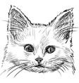 sketch kitten vector image vector image