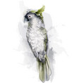 tropic parrot bird watercolor cute bird vector image vector image
