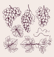 grape hand drawn vine leaves and branch tendrils vector image vector image