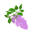 Lilac twig with flowers and leaves vintage hand vector image