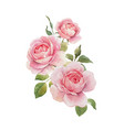 watercolor rose omposition vector image vector image