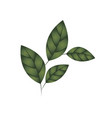 branch with leaves isolated icon vector image