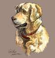 colorful golden retriever vector image