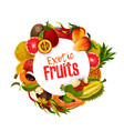 exotic tropical fruits banner vector image vector image