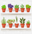 organic gourmet collection of different herbs vector image