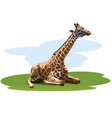 tired giraffe vector image vector image