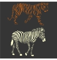 zebra and tiger vector image vector image
