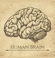 brain retro anatomic etching vector image