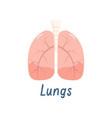 healthy lungs internal organ human anatomy vector image