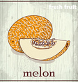 Hand drawing of melon Fresh fruit sketch vector image vector image
