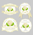 the theme cabbage cauliflower vector image vector image
