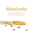 Wheat Ear vector image vector image
