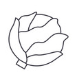 cabbage line icon sign on vector image