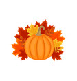 autumn design with autumn leaves and pumpkin vector image