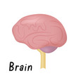 brain healthy internal organ side view human vector image vector image