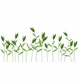 green weeds isolated vector image