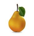 juicy pear in realistic style vector image vector image