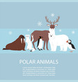 polar and arctic animals and birds vector image