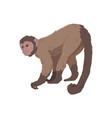 icon monkey vector image