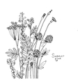 sketch of the wildflowers vector image vector image