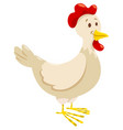 chicken or hen farm animal character vector image vector image