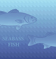 fish labrax vector image