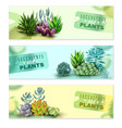 succulents horizontal banners set vector image