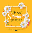 fashion summer new collection vector image vector image