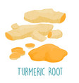 fresh turmeric root on white background vector image vector image