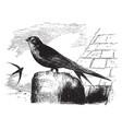 common european swift vintage vector image vector image