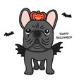 French bulldog with wing and pumpkin monster
