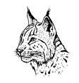 Hand drawn lynx head vector image