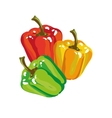 Sweet Paprika Bell Pepper In Three Colors vector image