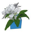 white flowers in a pot on white background vector image vector image
