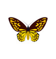 yellow butterfly colorful icon top view art vector image