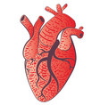 human heart design vector image