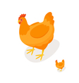 Isometric 3d of chicken vector image