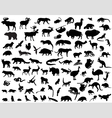 Silhouettes of animals vector image vector image