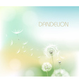 Abstract flower dandelion vector image vector image