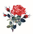 beautiful realistic rose in vintage antique style vector image vector image
