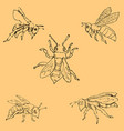 flies sketch by hand pencil drawing by hand vector image vector image