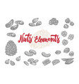 hand drawn nuts elements set vector image vector image