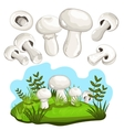 Champignon mushroom isolated vector image