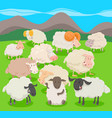 flock of sheep characters cartoon vector image