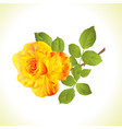 flower yellow rose stem and leaves vintage vector image vector image