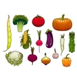 Fresh vegetables from the autumn harvest vector image vector image