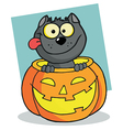 Happy Cat In A Pumpkin vector image