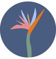 icon of colorful strelizia vector image vector image